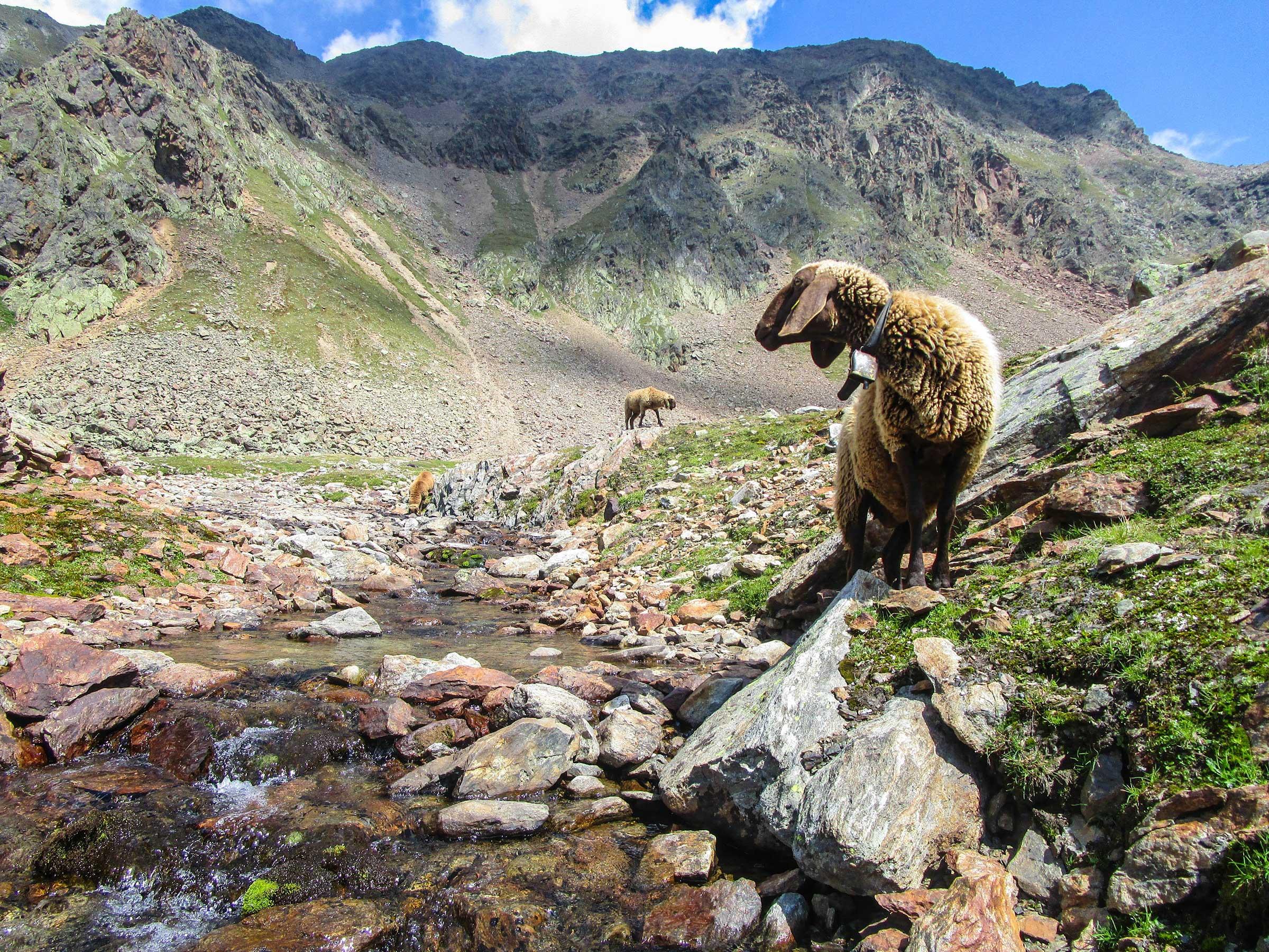Klettersteig Obergurgl : Obergurgler klettersteige zirmwald schwärzenkamm hochwilde