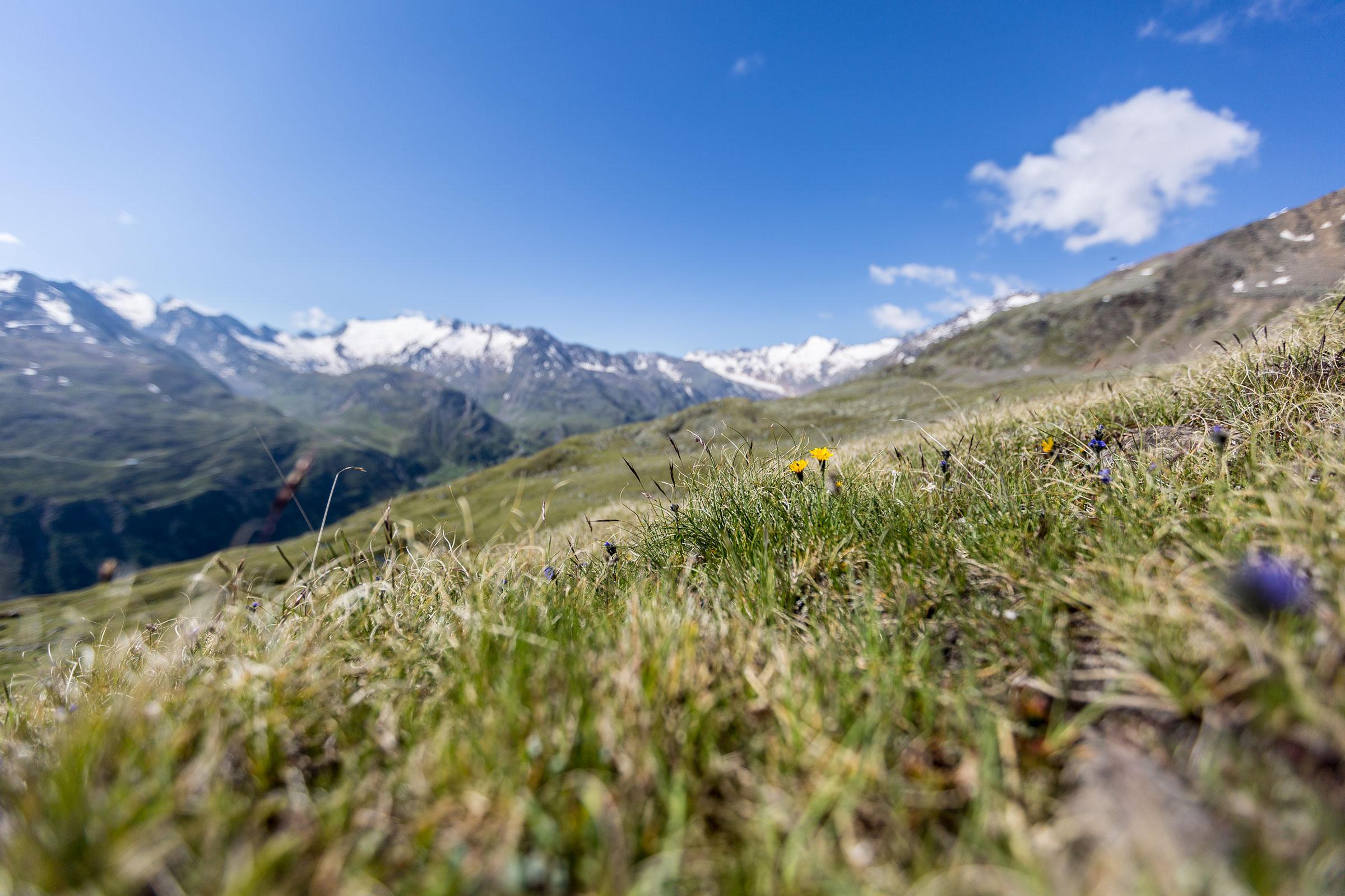 Bergwiese - Gletscher Trailrun Obergurgl-Hochgurgl
