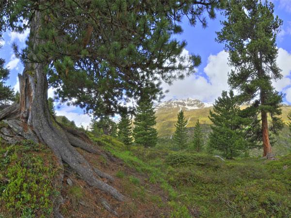 Hochgebirge in Gurgl erforschen